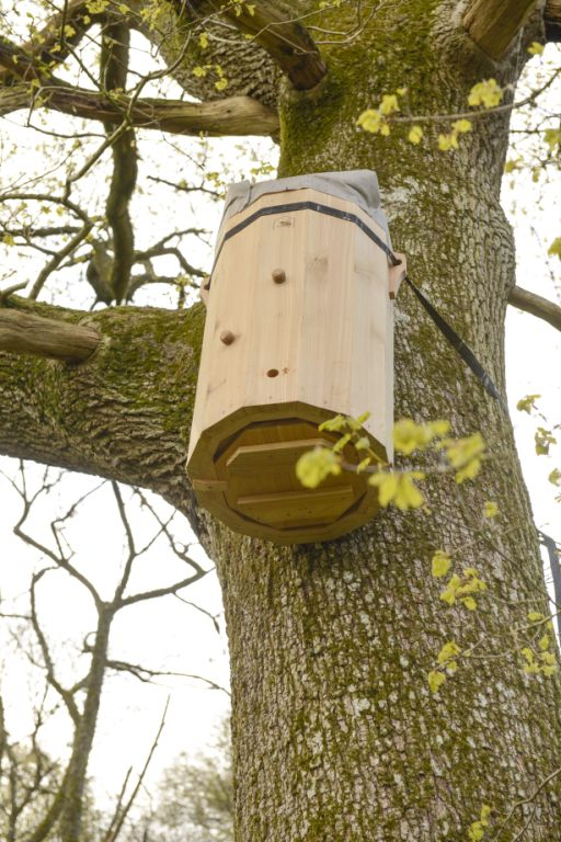 FREEDOM HIVE IN TREE April 2016 (19)
