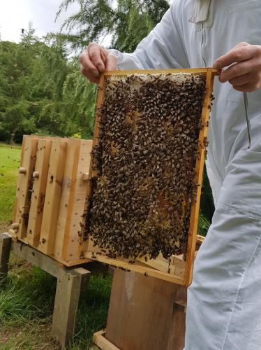 27th July . Bees quickly found entrance to new hive