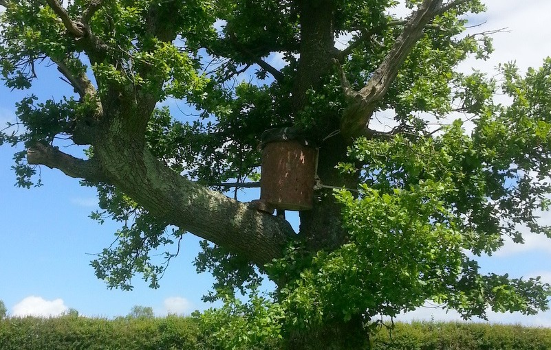 Freedom and log hives; rewilding the honey bee