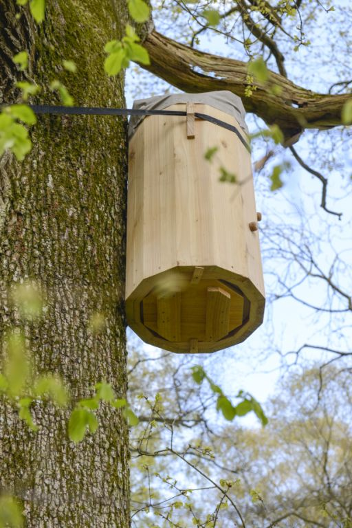 FREEDOM HIVE IN TREE April 2016 (20)