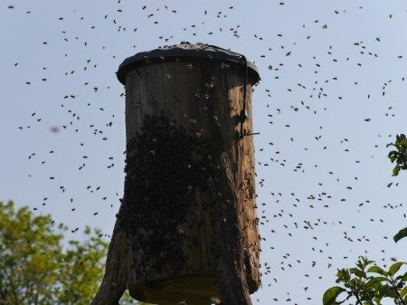 The Wonder of a swarm!