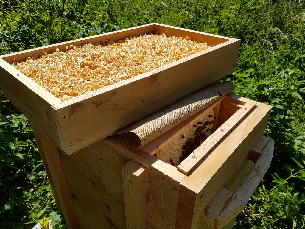 Growth of a colony in a Golden hive – Bee Kind Hives