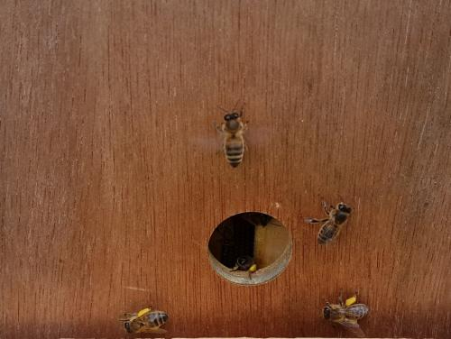 Bringing pollen back to hive
