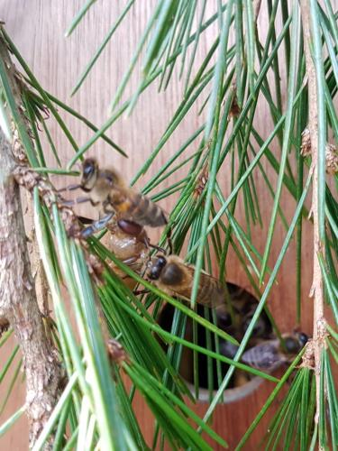 23rd July. Observed bees removing unwanted drone larvae.