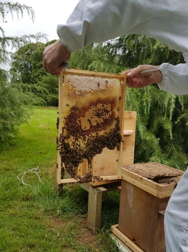 27th July. After setting to new location, the frames are transferred into a Golden hive